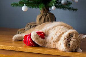Cat playing under Christmas tree