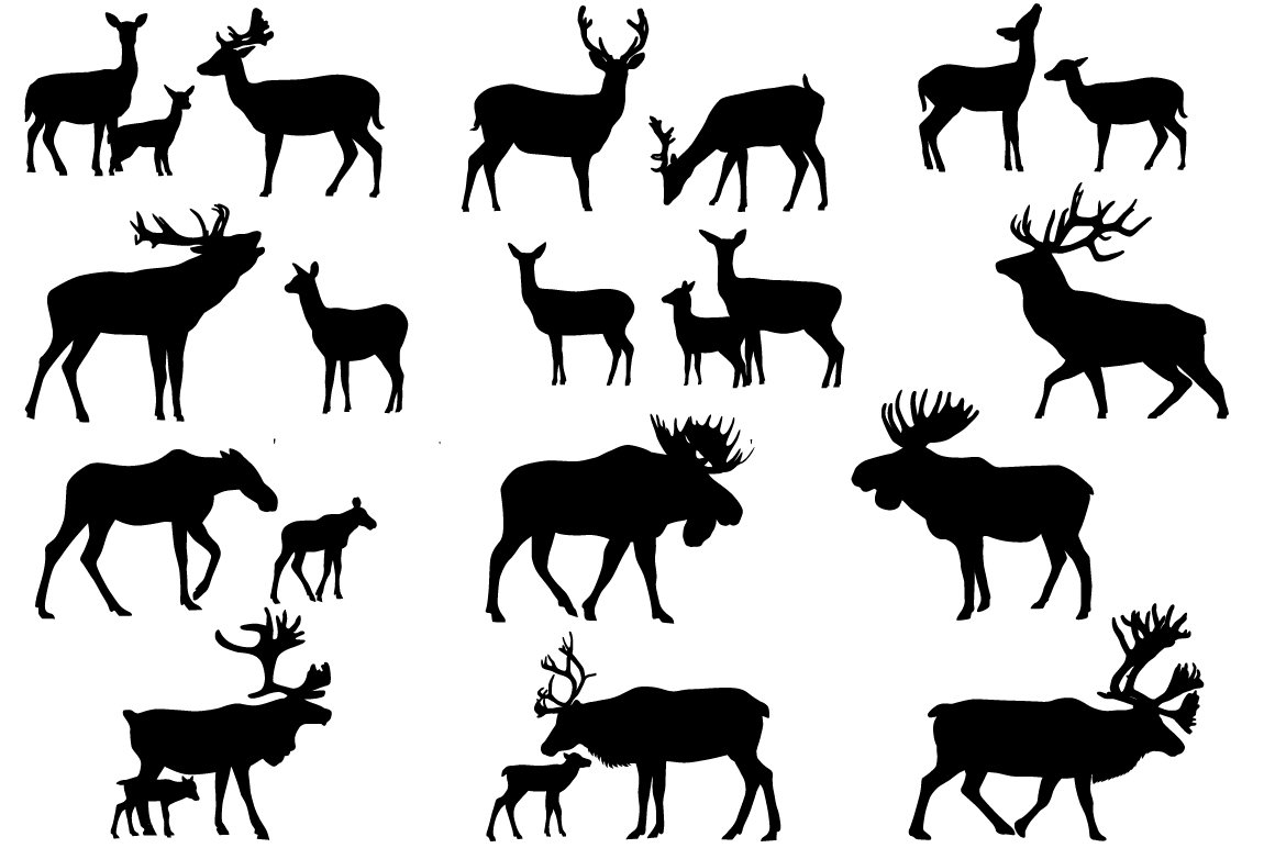 Deer family ~ Illustrations ~ Creative Market