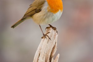 Beautiful small bird in the nature