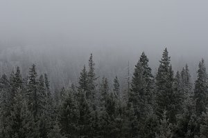 View of Trees in Fog