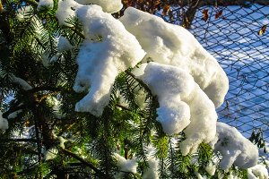 Branch christmas tree on snow