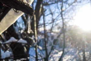 Shiny icicle. Sun background.