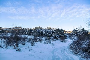Amazing winter evening landscape