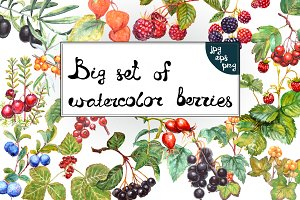 Set of 15 watercolor berries