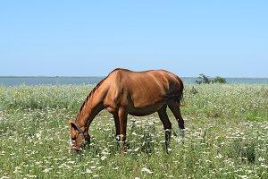The grazed horse