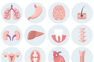 Human organs flat icons vector set