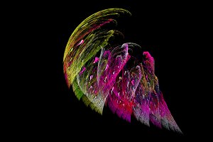 Colorful bird wing abstract background