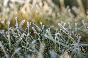 Macro of winter grass