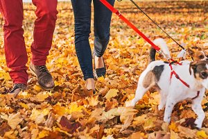 Happy young couple walking outdoors in autumn park with dogs