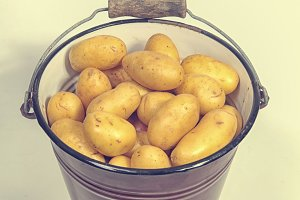 Bucket with potatoes