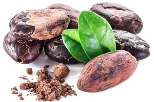 Cocoa beans isolated on a white