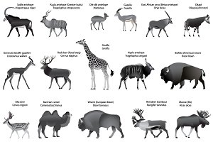 Even-toed ungulates animals