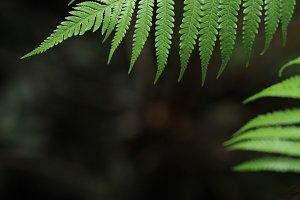 Green Fern 2