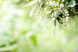 White Flower Tree 4