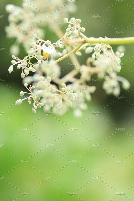 Tiny White Flowers 3 Nature Photos Creative Market