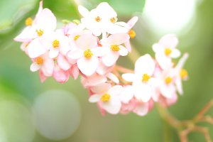 Pink Flowers 4