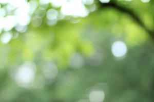White Flower Bokeh Background