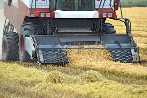Collection sloping rice threshing. Agricultural machinery harvest on the field.