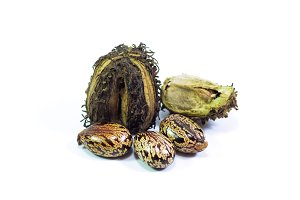 Castor seeds on a white background