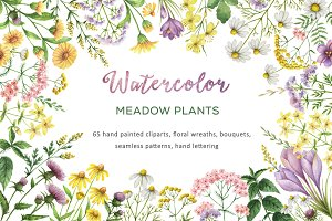 Watercolor meadow plants