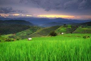 Terraced Rice Field