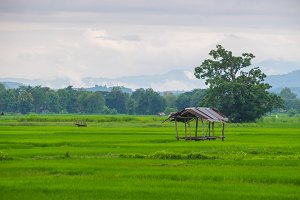 Cottage in Rice Field