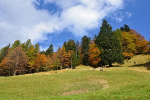 Autumn Forest, Landscape, Meadows