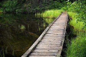 Boardwalk in Marshland