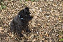 dog in autumn