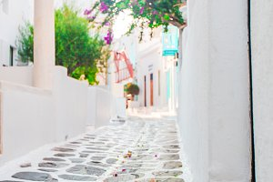 The narrow streets of greek island with cat. Beautiful architecture building exterior with cycladic style.