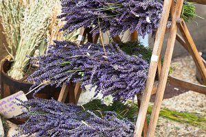 Lavender bunches selling