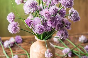 Bouquet of onion (chives) flowers