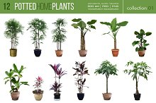 12 Potted Home Plants vol.1