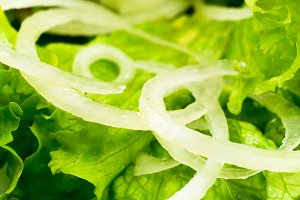Macro view of the leaves of lettuce
