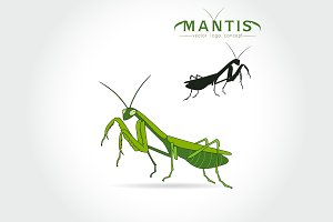 Beetle praying mantis isolated
