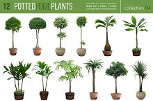 12 Potted Home Plants vol.4