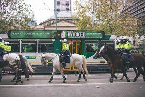 Melbourne Police Riding Horse