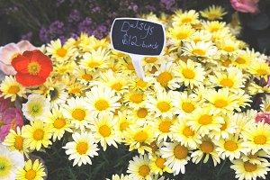 Daisy for sale
