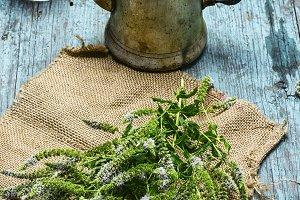 herb mint tea
