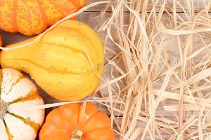 Autumn Gourd Still Life With Straw