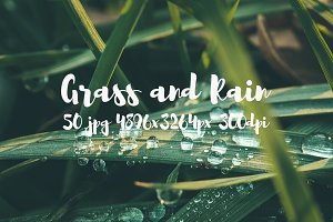 Grass and rain