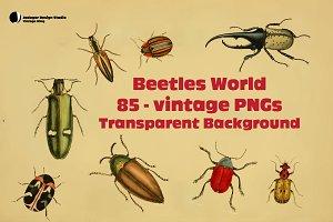 Beetles-85 Vintage-40% off