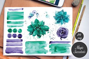Succulents. Watercolor