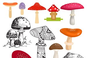 Bright different types of mushrooms