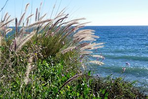 Feathered reeds, flowers and sea