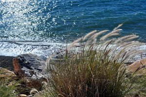 wild vegetation by the sea