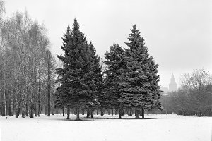 Early winter in Moscow City—120 film scan