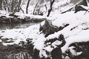 Near the creek in early winter