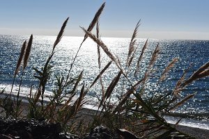 sun and sea with reeds