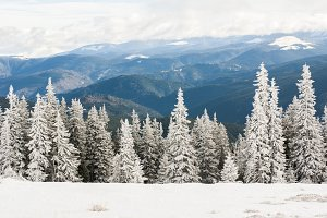 White forest and mountains